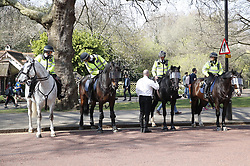 © Licensed to London News Pictures. 29/03/2019. London, UK. Police horses standby ahead of various protests outside Parliament as MPs debate the latest vote on the Withdrawal Agreement in the House of Commons. Photo credit: Peter Macdiarmid/LNP