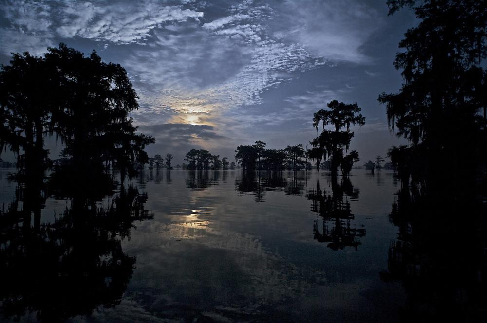 Henderson Lake Swampscene