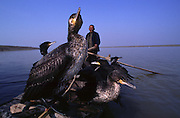 Fisherman and his cormorants on Poyang lake.