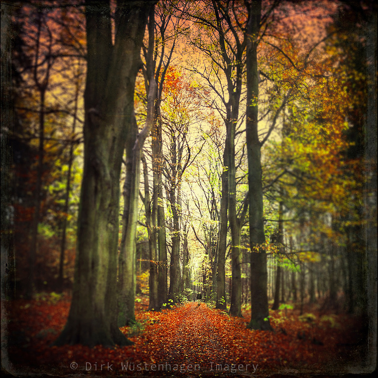 Beech tree alley on a rainy November day- texturized photograph<br />