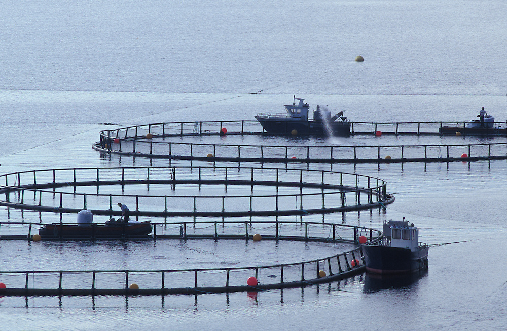 Europe, Norway, Feeding skiffs at salmon fish farming pens along Bergsoyfjord near Sletnes