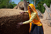 Indian woman villagers patting cow dung mound for cooking fuel at Kutalpura Village in Rajasthan, Northern India
