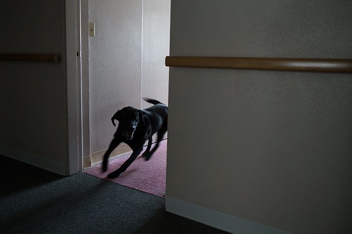GABE GREEN/Press<br /> <br /> Rescue dog Maya runs from room to room searching for a hidden &ldquo;victim&rdquo; as part of a training exercise Friday with the Coeur d&rsquo;Alene Fire Department K-9 team.
