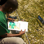 Seagrass monitoring during low tide, Chumbe Island Coral Park, Tanzania, Africa
