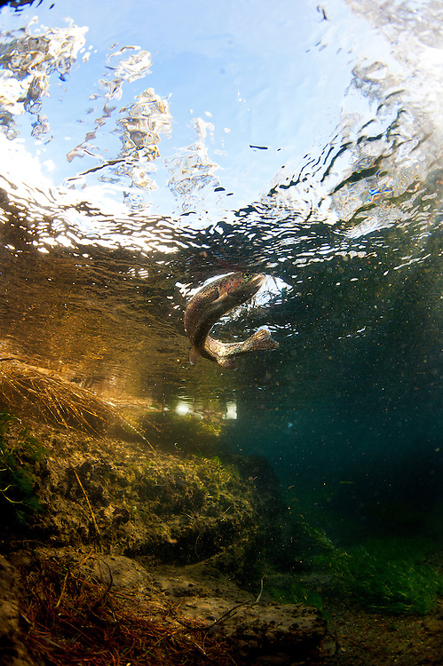 &copy;Ryan Brennecke 2015<br />