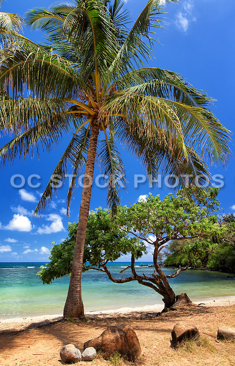 Anahola Beach Kauai Hawaii
