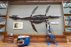 2020_07_27_Natural_History_Museum_RT