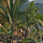 A  jungle path in Puerto Vallarta, Mexico.  Photo by William Byrne Drumm.