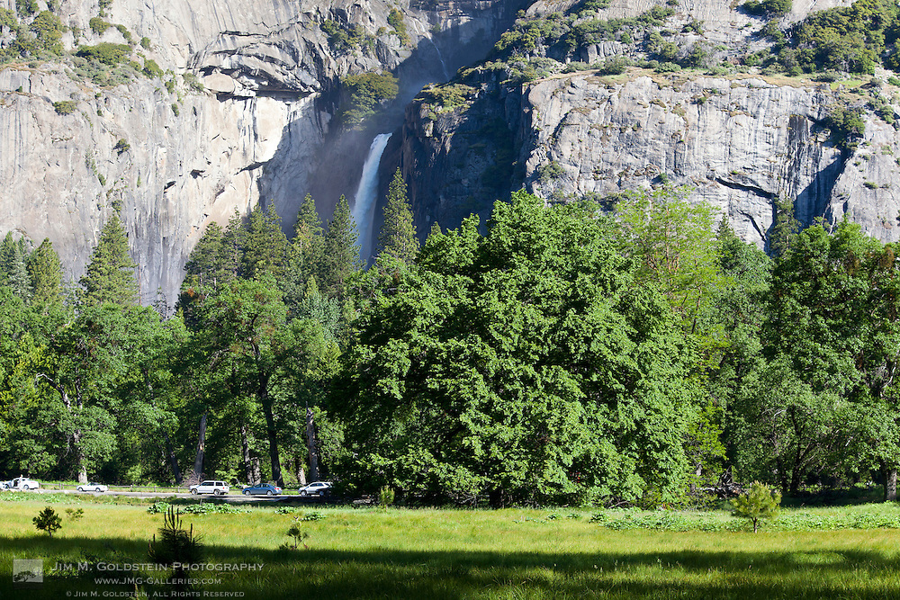 Green leafs cover Cook's Meadow Elm tree with lower Yosemite Falls in the background - Yosemite National Park, California