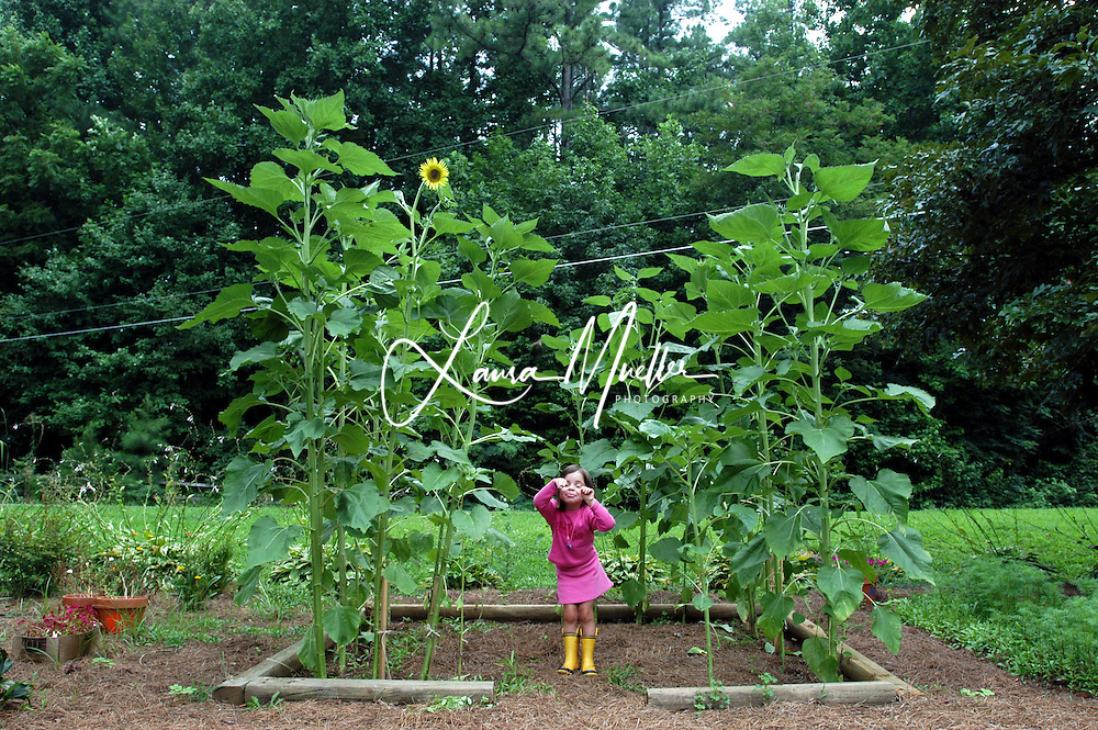 7/26/05  Summer is a magical time in the garden, especially when children help create a sunflower house. © Laura Mueller