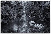 Creek at the Carite State Forest, Patillas, Puerto Rico.