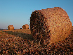 Basilicata, Italy - Te round bale in a field