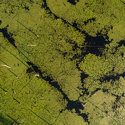 An aerial view of a beaver pond in a forest in Merrimac, Massachusetts.