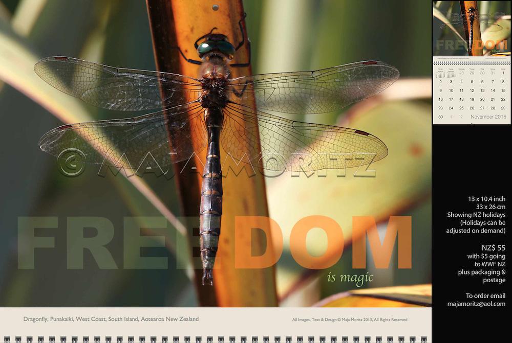 Freedom is magic, Dragonfly, Punakaiki, West Coast, South Island, Aotearoa, New Zealand