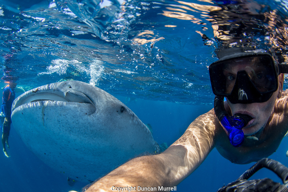 Selfie with whale shark (Rhincodon typus), Honda Bay, Palawan, the Philppines.
