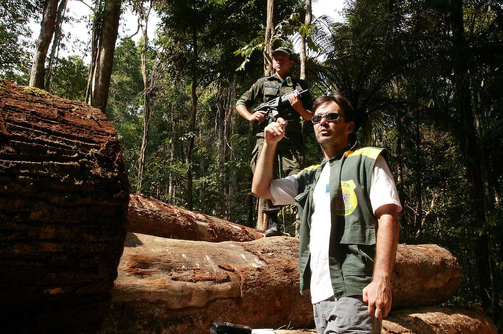 Nov. 19, 2003: Ibama seized illegal at Jaurucu River in Para State, Brazil. ©Daniel Beltra
