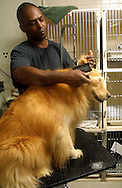 "A 9.96 IMAGE OF:..Pampered Pooches:  ""Katie"" gets a comb-out at Club Pet in Chantilly, Virginia, photo by Dennis Brack,"