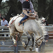 Will Redwood from Geraldine in action during the Open Bareback competition at the Southland Rodeo, Invercargill,  New Zealand. 29th January 2012