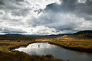 An angler fly fishes for trout during an autumn day on the upper Blackfoot River within the Blackfoot River Wildlife Management  Area in southeast Idaho.
