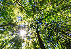 THEMENBILD - Buchenwald in der Gemeinde Grundlsee, die am 11. Juni 2017 als neunte steirische Gemeinde zum Luftkurort ernannt wurde, aufgenommen am 11. Juni 2017 in Grundlsee, Österreich // beech forest in Grundlsee, which was appointet as a climatic spa on 2017/06/11, Grundlsee, Austria. EXPA Pictures © 2017, PhotoCredit: EXPA/ Martin Huber