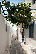 A narrow stone alley covered by grape vines and white washed hoouses in Kastro, Sifnos, The Cyclades, The Greek Islands, Greece, Europe