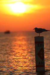 Seagull standing on swimming buoy