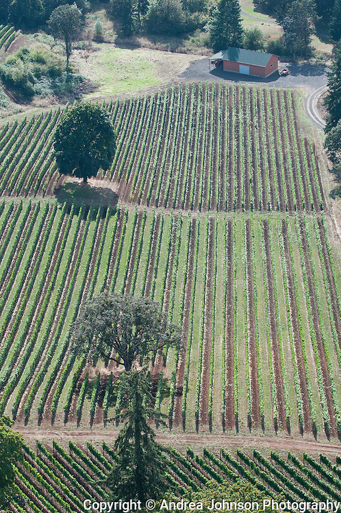 Alexana vineyards, dundee hills, Oregon