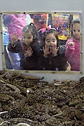 A group of school children look through a window into one of the rattlesnake pits filled with hundreds of western diamondback rattlers during the 51st Annual Sweetwater Texas Rattlesnake Round-Up March 13, 2009 in Sweetwater, Texas. During the three-day event approximately 240,000 pounds of rattlesnake will be collected, milked and served to support charity.