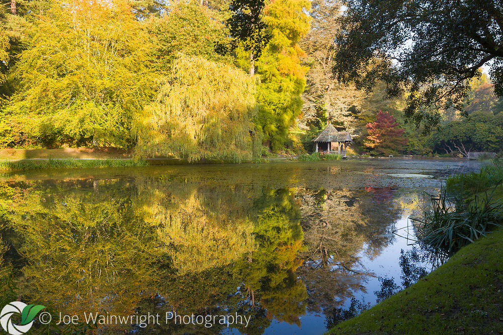 Autumn tones reflected in the pond at The Far End in Bodnant Garden, North Wales - photographed in October