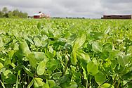 Puna-apilapelto on maatalouden paras aurinkovoimala.