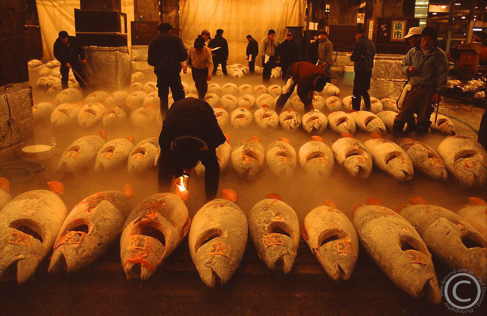 The world's largest fish market at Tsukiji in Tokyo. Here giant bluefin tuna is on sale.