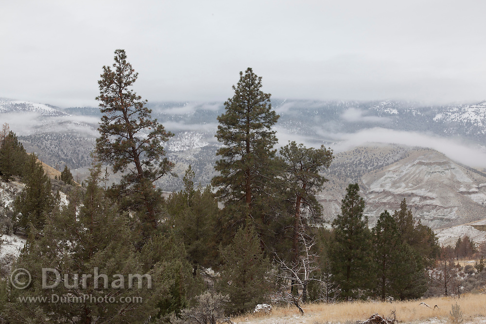 A morning frost of snow in the mountains around Bransen Creek, adjacent to the John Day Fossil Beds National Monument, Oregon. Bighorn sheep thrved in this habitat until they dies off around 1900. They were re-introduced in 2010.