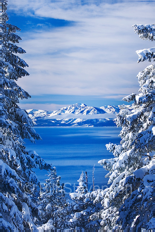 An image of Lake Tahoe in winter. In the early morning Mount Tallace is seen through evergreen trees covered in newly fallen snow.