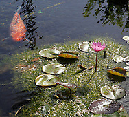 Maui Pond
