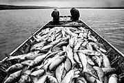 Commercial fishermen work on the Illinois River. ©Peoria Journal Star/David Zalaznik