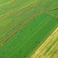 EN&gt; Cows in the fields separated by small water canals |<br />