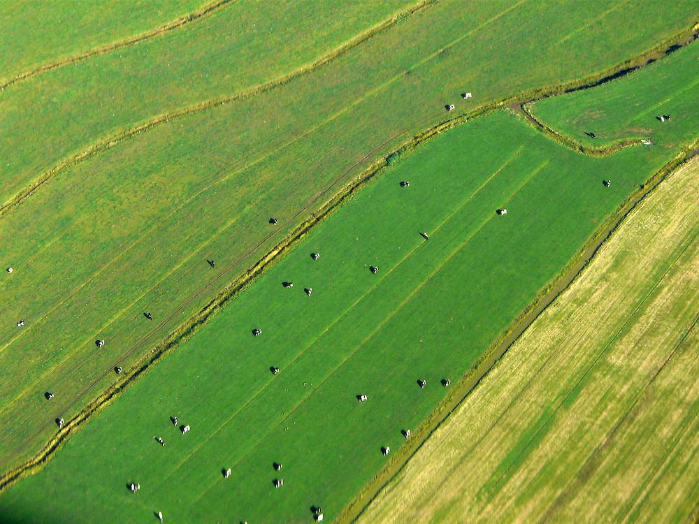 EN&gt; Cows in the fields separated by small water canals  <br /> SP&gt; Ganado en los potreros, separados por peque&ntilde;os canales de agua.