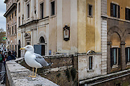 Gull on the Ponte Fabricio leading to the Jewish Ghetto in Rome.