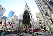 The 75-foot Rockefeller Center Christmas Tree, from State College, PA, is put into place, Saturday, Nov. 11, 2017, at Rockefeller Plaza in New York.  The 85th Rockefeller Center Christmas Tree Lighting ceremony will take place on Wednesday, Nov. 29. (Diane Bondareff/AP Images for Tishman Speyer)