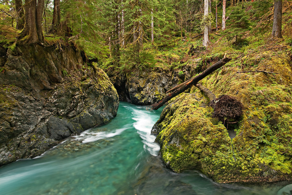 River near Pony Bridge, near Quinault, Olympic National Park, Washington