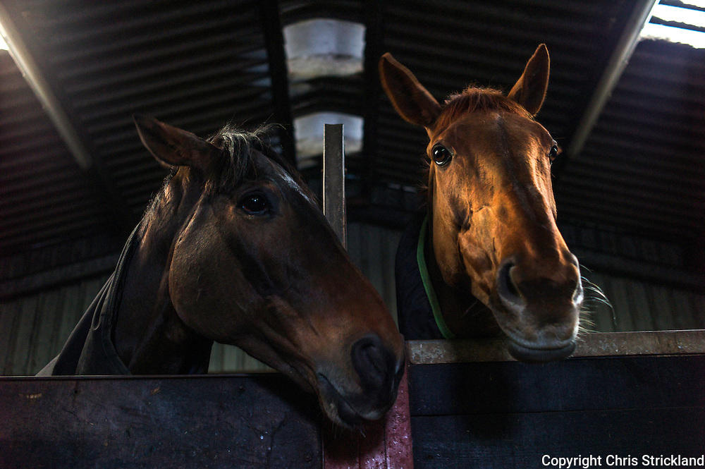 Oscar Stanley (l) and Durban Gold, both trained in Jed country by Di Walton.