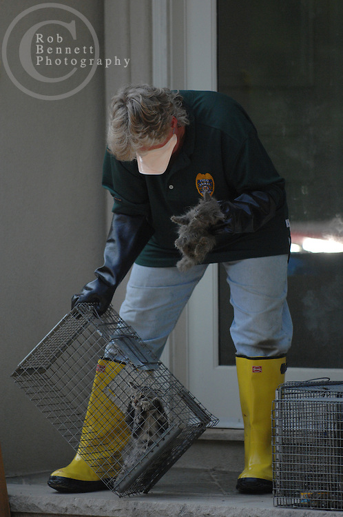 Here, Carol Tyler of Tyco Animal Control removes cats from the home..---.Saddle River, NJ, - August 16, 2007 - Dozens of cats (most alive, some dead) found neglected in NJ mansion - Authorities Thursday continued to look for animals in a feces-ridden mansion in Saddle River (25 Burning Hollow Road) after removing at least 23 dead cats and dogs and rescuing dozens more pets - perhaps as many as 90...Rob Bennett for The New York Times