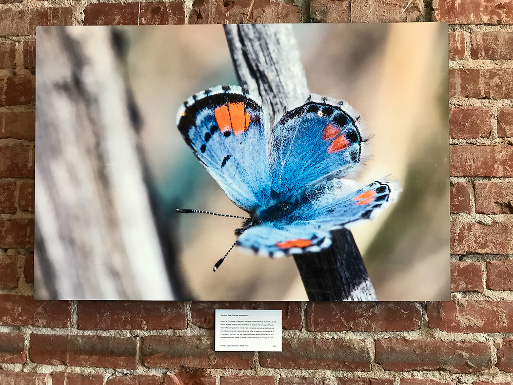 "30""x20"" Dye-sublimation aluminum super glossy (Sonoran Blue) at Bareburger, Santa Monica, CA, USA, on 20-Oct-17"