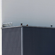 Security on hand as President Barack Obama visits the Vehicle Assembly Building at the Kennedy Space Center prior to the scrub of Endeavour's STS-134 launch. Hours later, President Obama would approve a military strike in Pakistan on Osama Bin Laden which would result in the death of the terrorist and mastermind of the 9/11 attack on the Twin Towers..Image taken on April 29, 2011. (Photo Credit: Alex Menendez)