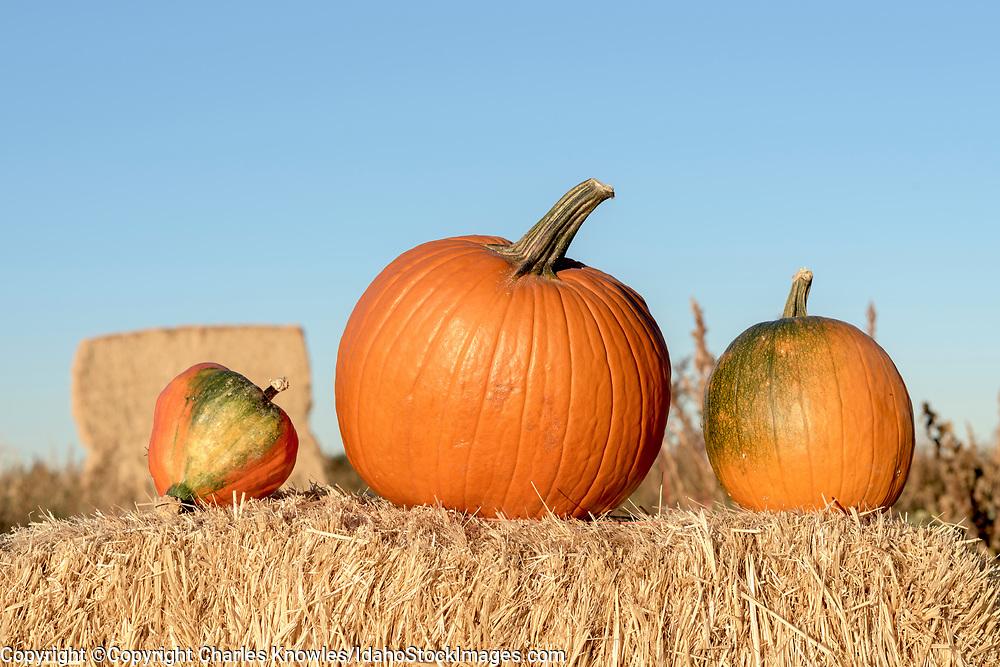 Uniquely shaped pumpkins on a hay bale.