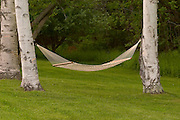Hammock between birch trees.