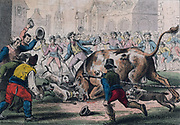 Bull Baiting. Print, London, 1816.