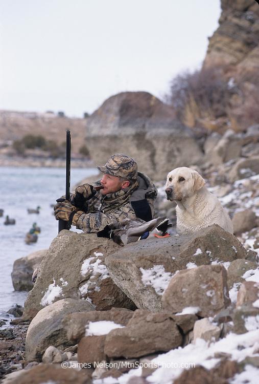 34-498. A duck hunter with a yellow Labrador retriever calls ducks along the Snake River, Idaho.