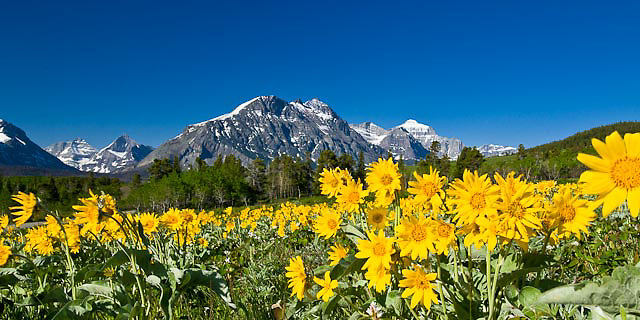 balsom flowers, spring, red eagle mountain, glacier national park, two dog flats, montana, crown of the continent