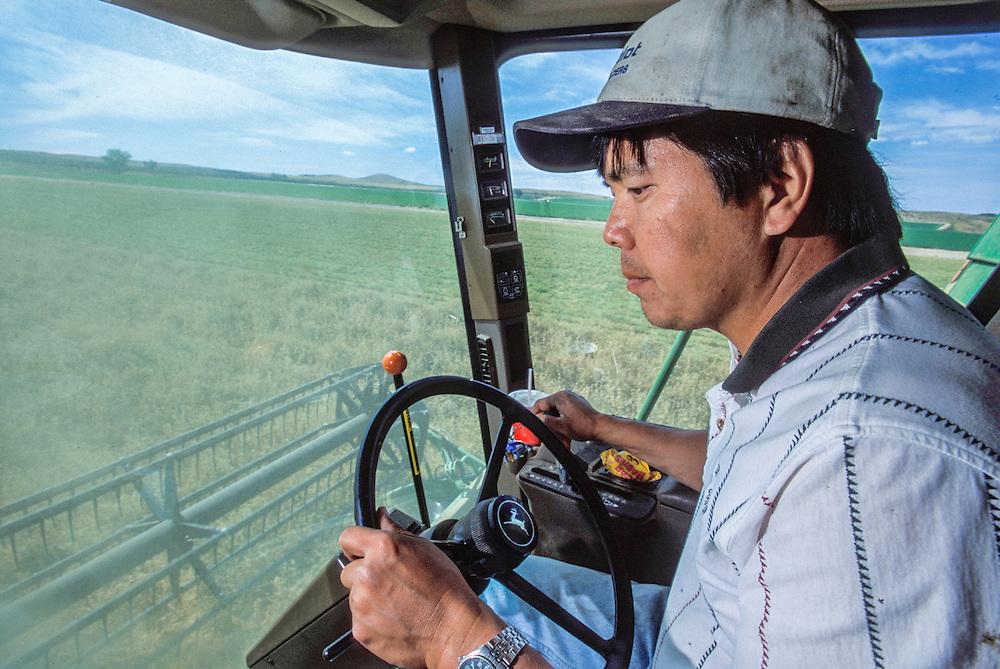 Oregon, USA - Japanese-American farmer Dan Miyasako harvesting alfalfa seed